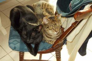 Bonny & Lilly